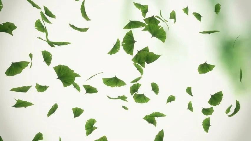 Full Screen Desktop Fall Leaves Wallpaper Nature Abstract Blurred Boheh Green Screen Spring