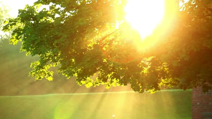 Fall Leaves Hd Mobile Wallpaper Sunlight Through Tree In Morningsun Stock Footage Video
