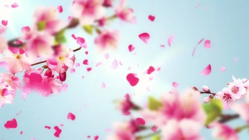 Petal Free Video Clips - (399 Free Downloads) - cherry blossom animated