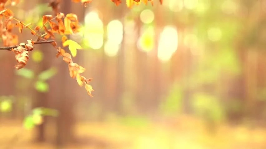 Maple Leaf Wallpaper For Fall Season Autumn Leaves On The Wind Blur Forest Background Fullhd