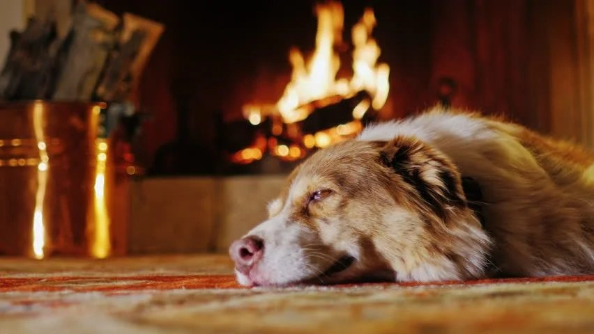 Cute Cat Hd Wallpaper Download Dog Lying In A Cozy House Near The Fireplace Stock Footage