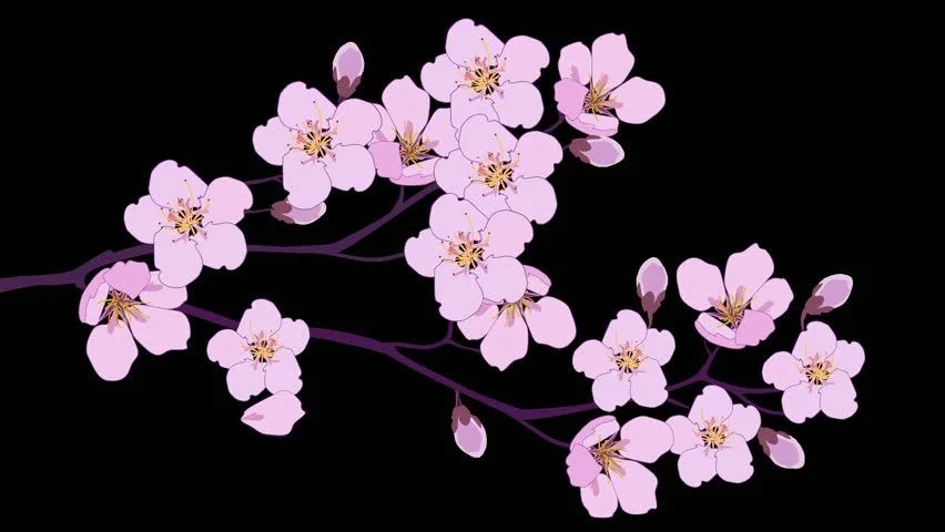 Animated berries Footage #page 2 Stock Clips - cherry blossom animated