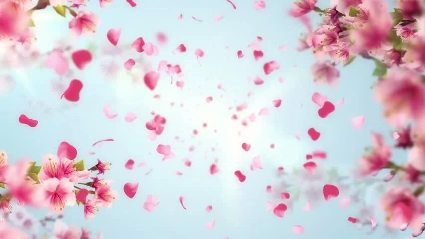 Sakura Cherry Blossom Park Japan Free Stock Video Footage Download - cherry blossom animated