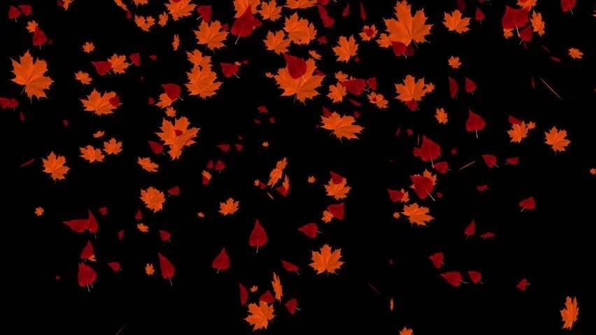 Rose Petals Falling Wallpaper Transparent Gif Falling Leaves Stock Footage Video Shutterstock