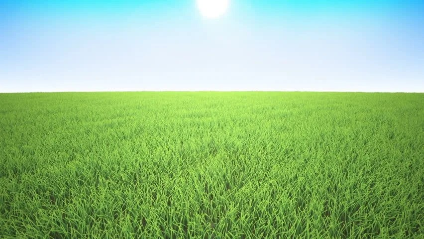 3d Moving Animation Wallpaper Download Green Grass Background Grass Is Moving With A Wind