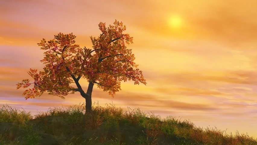 Fall Farm Desktop Wallpaper 4 Seasons Summer With Sunrise Animated Background Stock