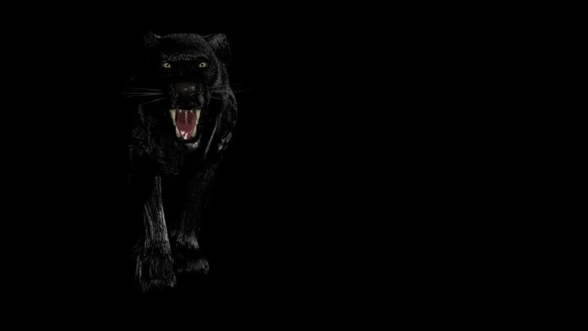 Lion Live Wallpaper Iphone X Black Panther Stock Footage Video Shutterstock