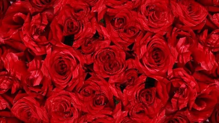 Falling Rose Petals Wallpaper Rose Background Stock Footage Video 124663 Shutterstock