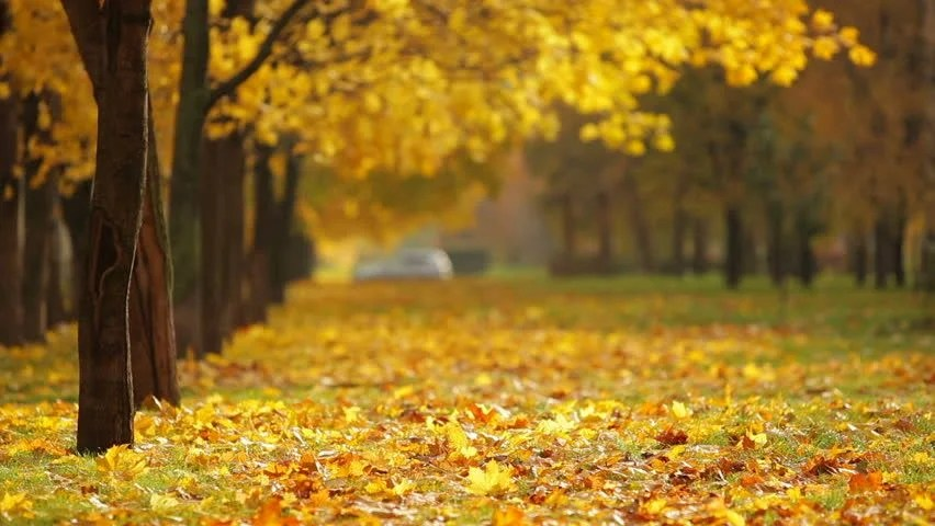 Fall Desktop Wallpaper Themes Leaf Fall In The Autumn City Park Beautiful Background