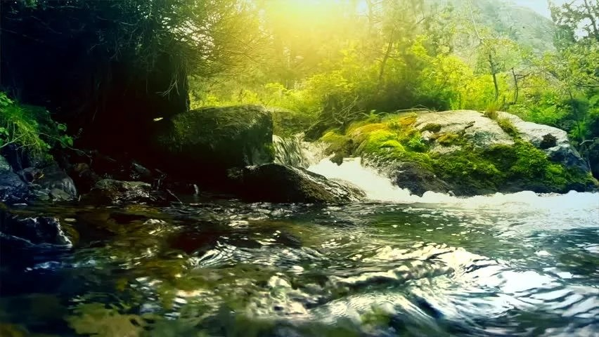 Fall Foliage Wallpaper Screensavers Beautiful Mountain River In The Forest River With Fresh