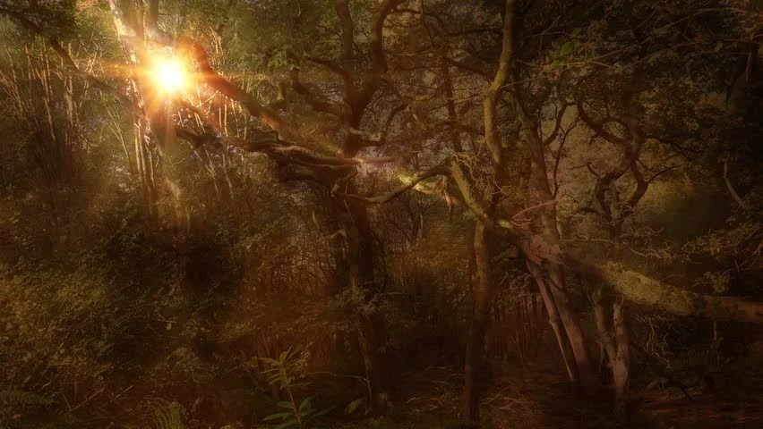 Spooky Fall Wallpaper Ambient Autumn Moonlight Magical Fantasy Forest Background