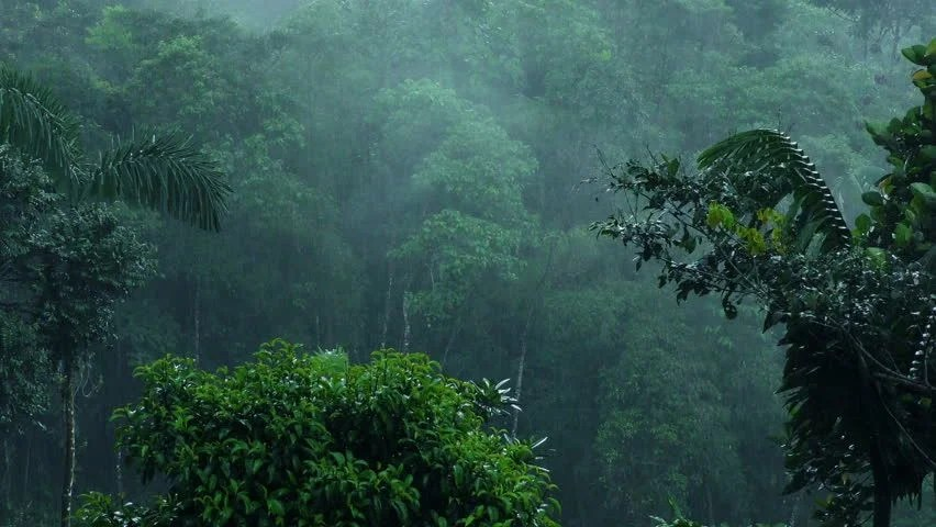 Falling Down Wallpaper Stock Video Clip Of Heavy Rain Over Clouds Forest In Andes