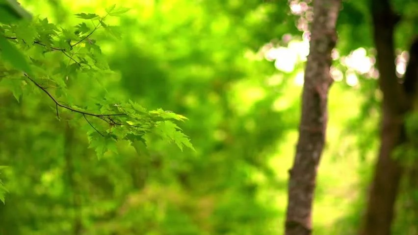 Microsoft Animated Wallpaper Lush Green Forest Background Stock Footage Video 100