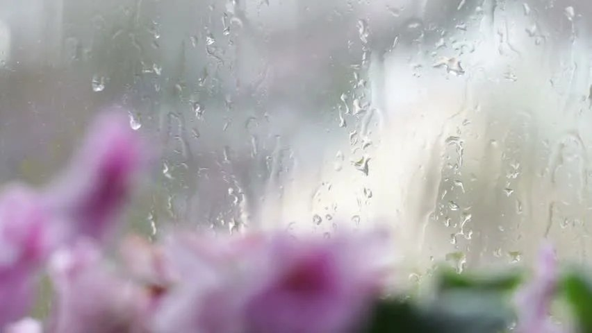 Rainy Fall Day Wallpaper Drops Of Rain Flow Down The Glass On The Window Beautiful