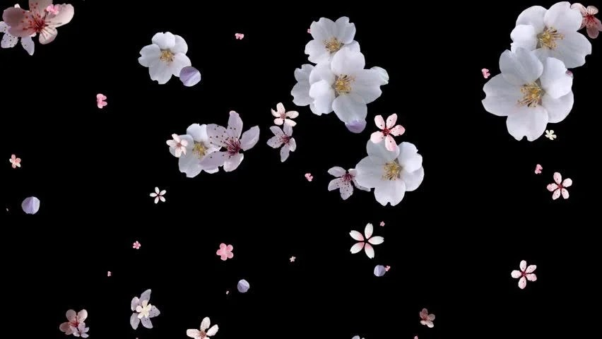Falling Down Flowers Wallpaper Pink Flower Petals Rising With Stock Footage Video 100