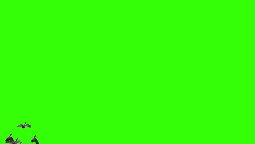 Green Screen Royalty-Free Stock Video in 4K and HD Shutterstock
