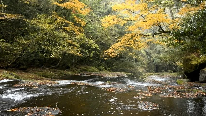 Fall Leaves Wallpaper Windows 7 A River Flows Over Rocks In This Beautiful Scene In The