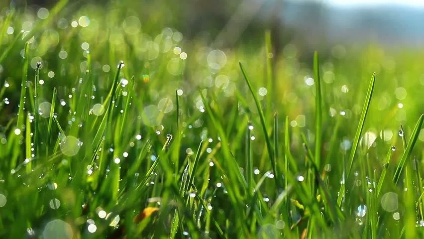 Earth 3d Live Wallpaper Windows 7 Stock Video Of Green Grass And Drops Of Morning 1357618