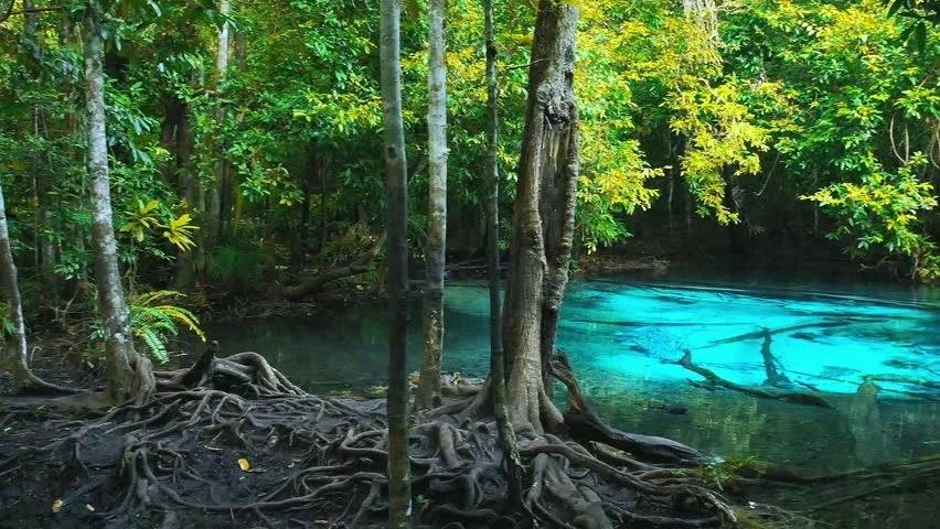 Beautiful Girl Live Wallpaper Hd Stock Video Of Beautiful Blue Water Pond Hidden In
