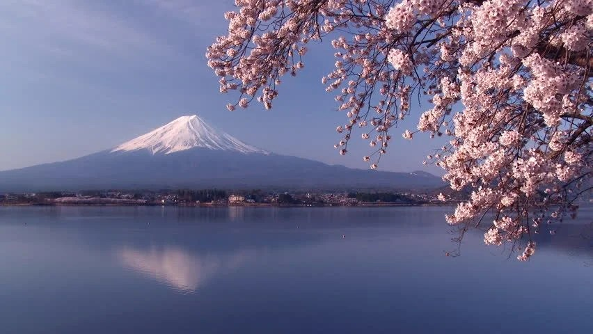 3d Animated Wallpaper Windows 10 Mt Fuji With Beautiful Cherry Blossom Stock Footage Video