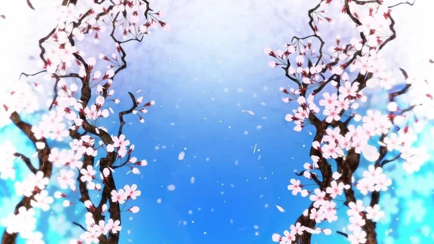 Cherry Tree In Full Bloom, Loop, Blue, Stock Footage Video 25174268 - cherry blossom animated