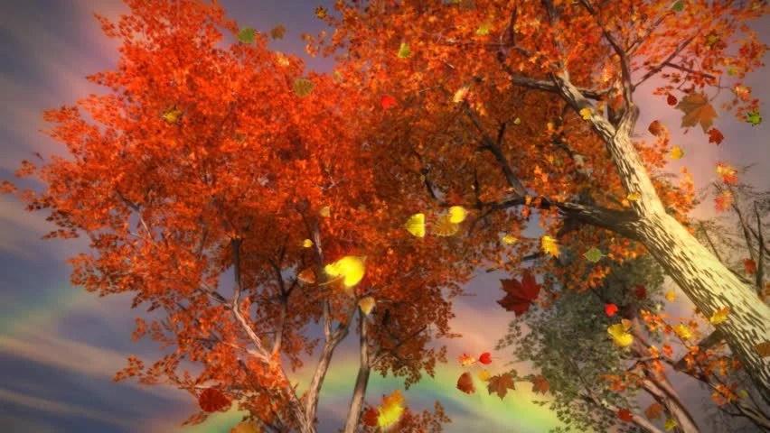 Falling Leaves Live Wallpaper Hd Falling Tree Stock Footage Video Shutterstock