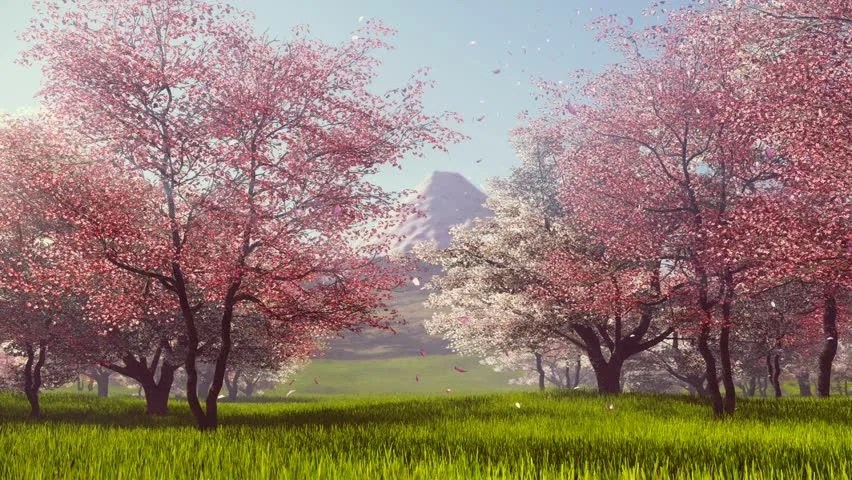 Free Animated Falling Leaves Wallpaper Petals Falling Stock Video Footage 4k And Hd Video Clips