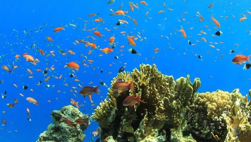Fish 3d Live Wallpaper Download Stock Video Of Underwater Coral Reef With Tropical Fish