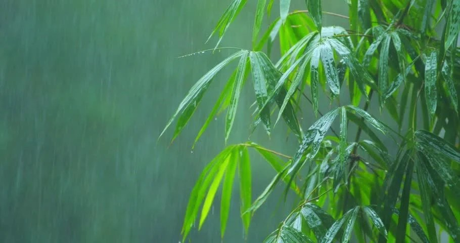 Fall Leaves Falling Wallpaper Wet Large Leaves Of Palm Tree Under Rain In Humid Climate