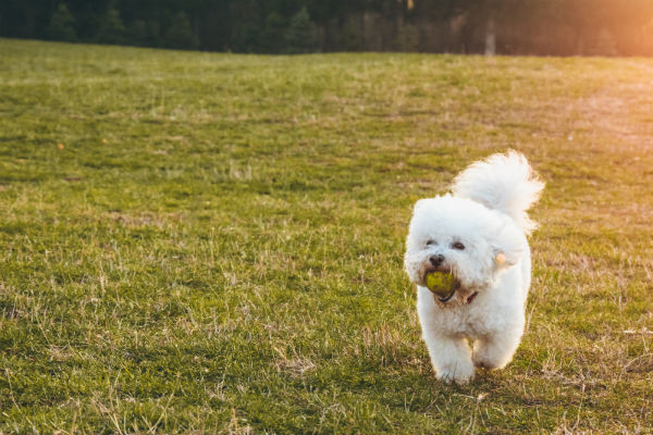 Are Tennis Balls Safe for Dogs?