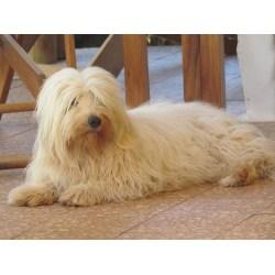 Phantasy India Russian Dog Names Male Upon Dogs To Madagascar German Shepherds Russian Dog Names bark post Russian Dog Names
