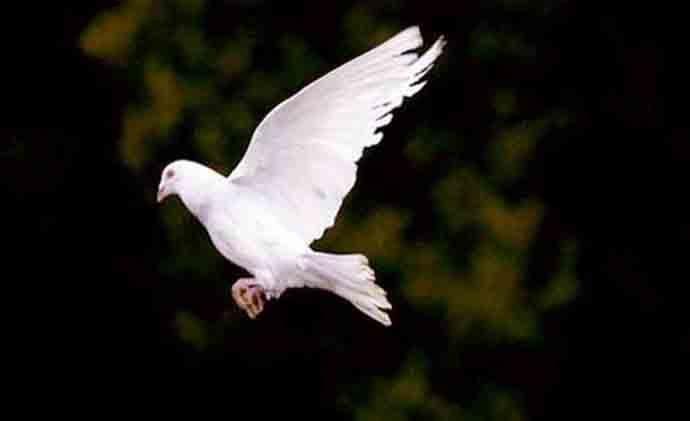 peace-690_030519123645.jpg