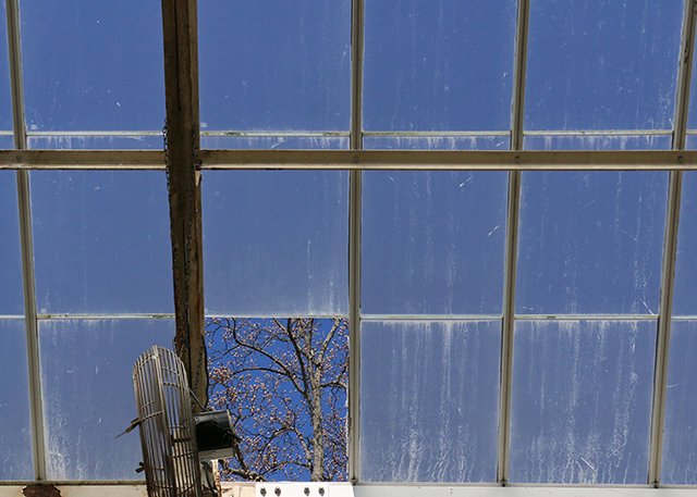 Hole in the Greenhouse Roof