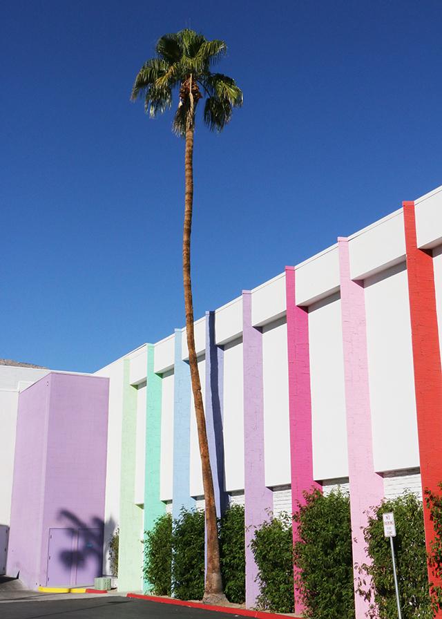 Palm Colors