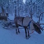 Lapland Adventures - Santa!