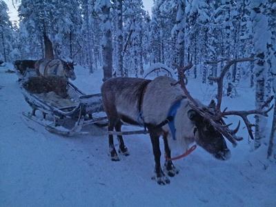 Lapland Blog B 18 400