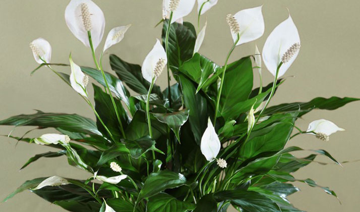 Enviro Monday: 10 Plants That Clean The Indoor Air In Your