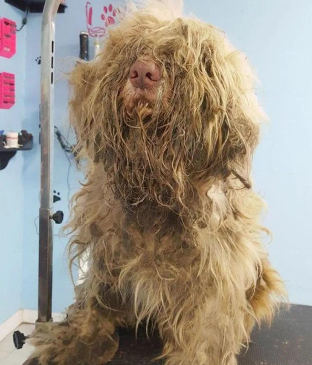 Ayudó a un perro callejero en medio de la noche y el cambio es increíble