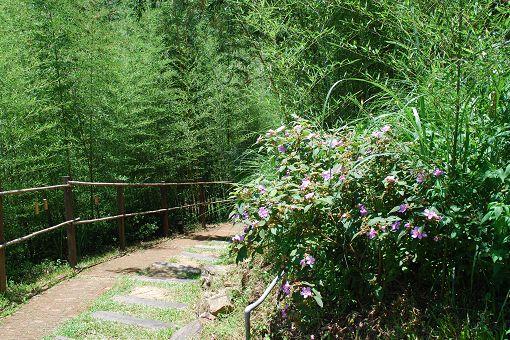 綠光森林-擁抱幸福之光 - 蝶飛四季 - udn部落格