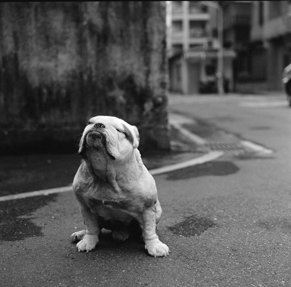 Urdhva mukha śvānāsana (upward facing dog) - Kodak TMAX400 shot at ISO400.