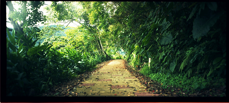 Walk your path - 2015-06-20 Shot on Kodak Portra 400 at EI 400. Color negative film in 120 format shot as 6x12.