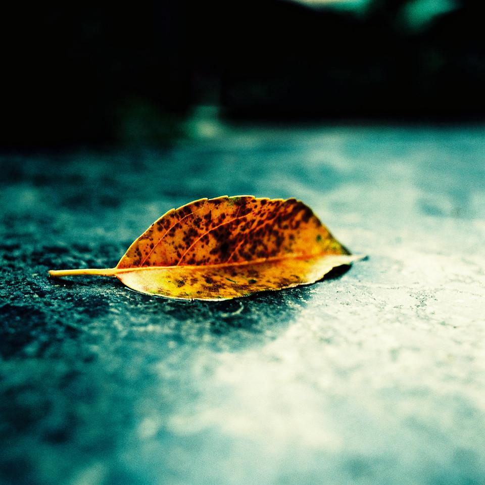 Autumn\