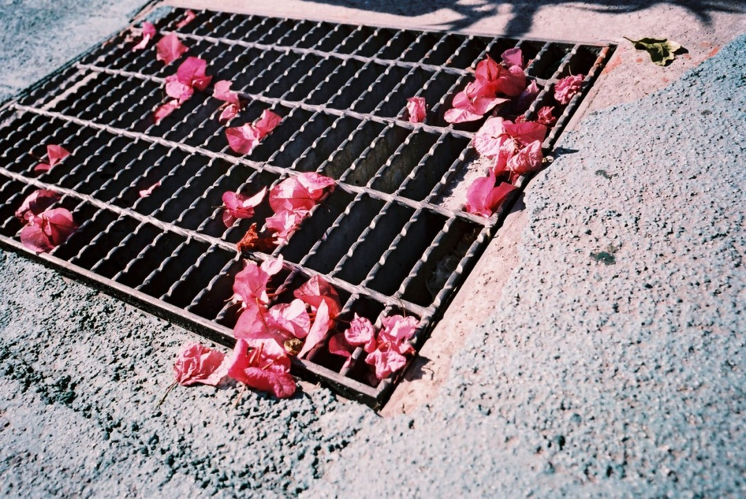 Grate pinks - Lucky Color Film Super 200 shot at EI 200. Color negative film in 35mm format.