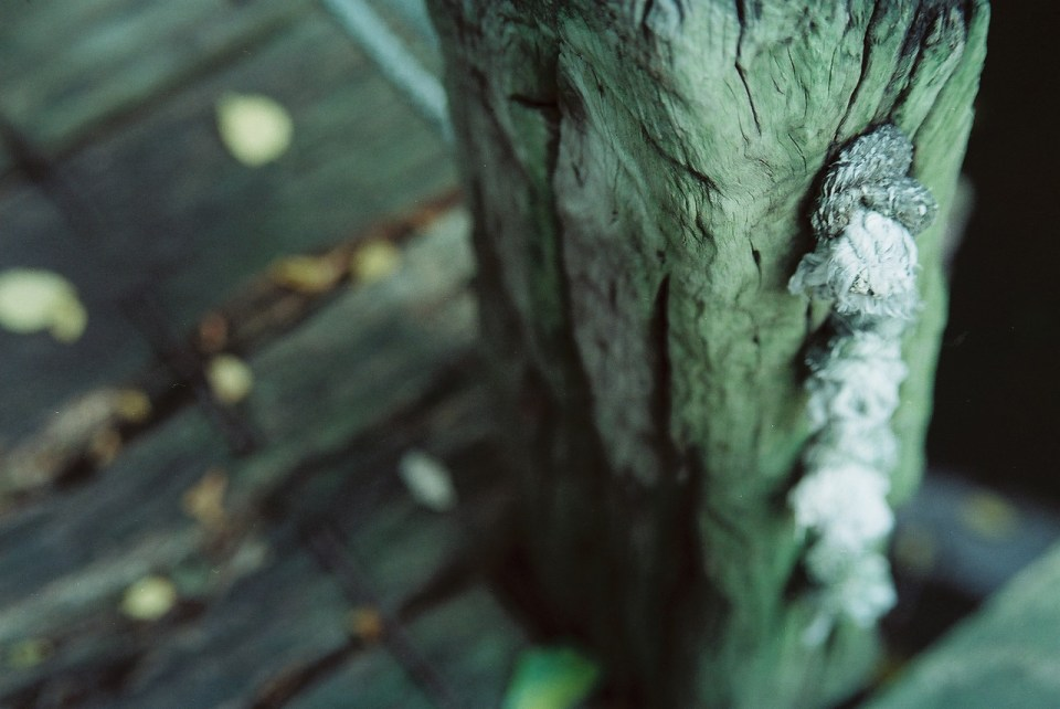 Knotty post - Kodak 250D (VISION3 5207) shot at EI 250. Color motion picture film in 35mm format.