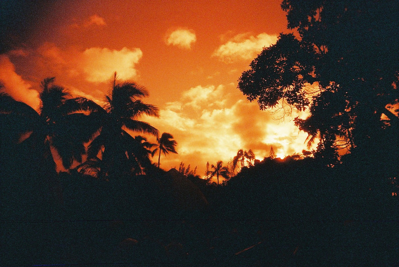 Hawaiian hues - 2015-06-16- Lomo Redscale XR 50-200 shot at EI 200. Color redscale negative film in 35mm format.