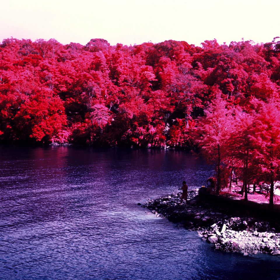 There are no fish in my pond - Kodak Aerochrome 1443 - ISO400 - Planar 80/2.8 - Orange #21 filter / 120 as 6x6