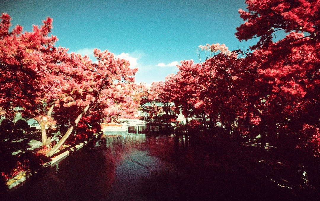 Tranquility - Shot on Kodak Aerochrome III (1443) shot at EI 400. Color infrared slide film in 35mm format. Orange #21 filter.