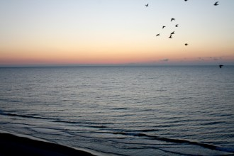 Birds flying over ocean at Myrtle Beach