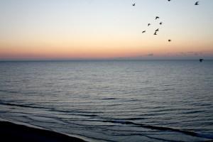 Myrtle-Beach-Birds_Edited