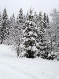 Nannestad Vinter 2